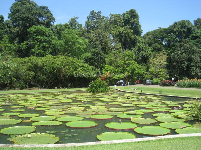 Kebun Raya Bogor with Kids