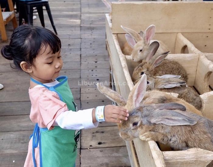 PVJ Kids Zoo