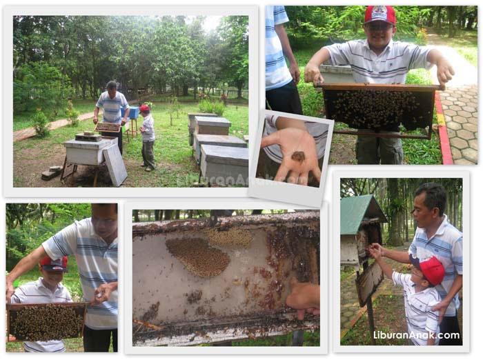 Taman Wisata Lebah Kids Holiday Spots Liburan Anak