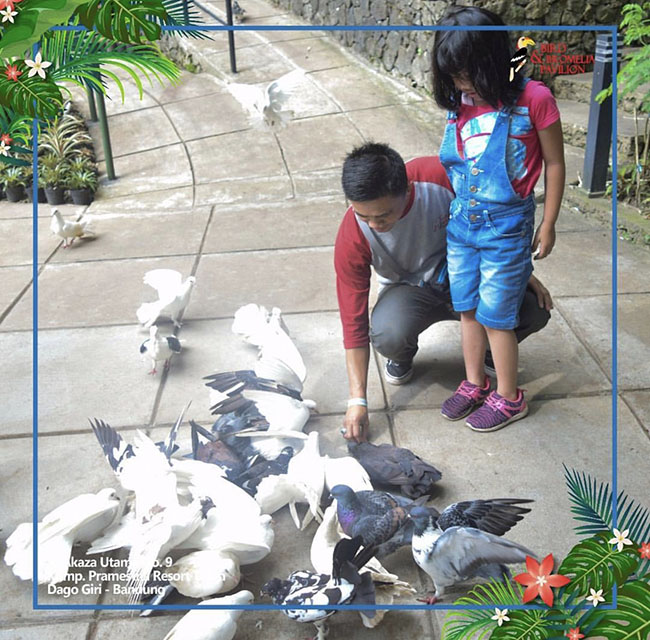 Bird & Bromelia Bandung