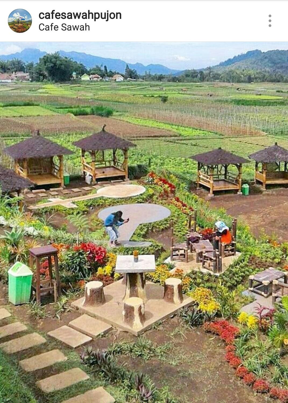 Cafe Sawah Pujon Kidul Kids Holiday Spots Liburan Anak