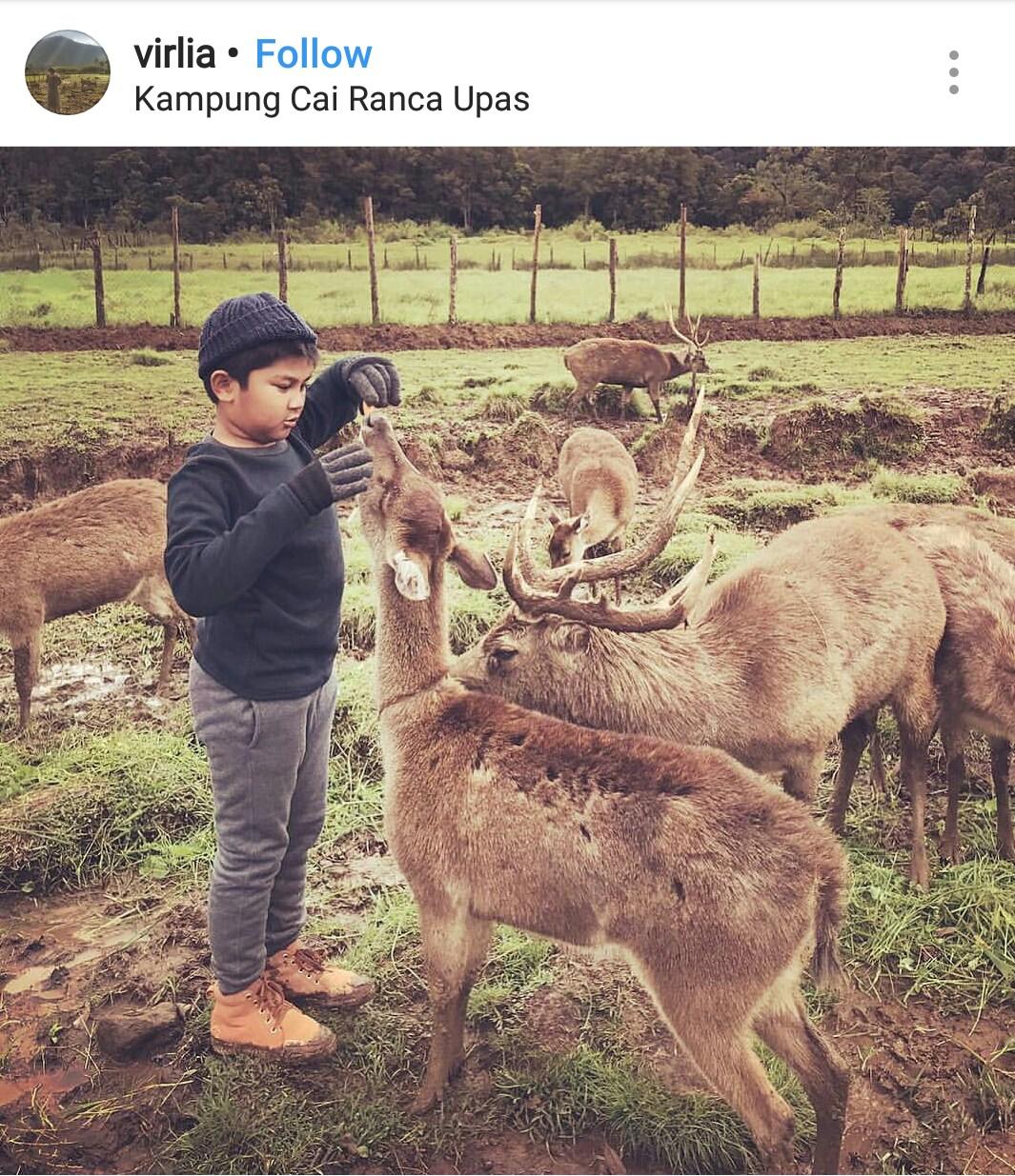 Konservasi Rusa Ranca Upas Ciwidey - Kids Holiday Spots - Liburan