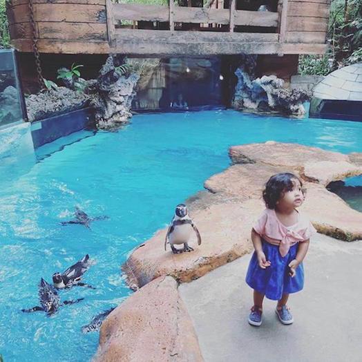 Taman Safari Indonesia, tempat staycation terbaik di Puncak! selain bisa lihat hewan-hewan lucu, ada juga wahana dan resto nya