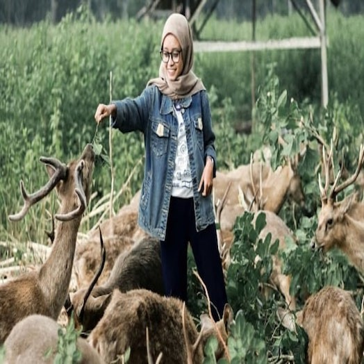 Maliran Deer Breeding