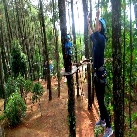 Kampoeng Pinus Sarangan